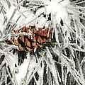 Pinecone In Snow by Steven Parker