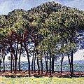Pines by Claude Monet