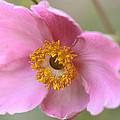 Pink-a-boo by Janice Bajek