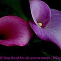 Pink An Purple Calla Lilys by Kathy Sampson