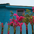 Pink And Blue House by Susan Rovira