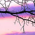 Pink And Purple Sunset by Robin Vargo
