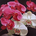Pink And White Orchids by Takayuki Harada