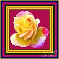 Pink And Yellow Rose by Marian Bell
