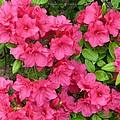 Pink Aura by Sonali Gangane