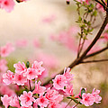 Pink Azalea Bush by Leslie Banks