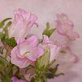 Pink Bell Flowers by Kim Hojnacki