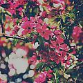 Pink Bloom by Omar Morales