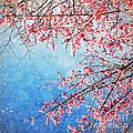 Pink Blossom by Setsiri Silapasuwanchai