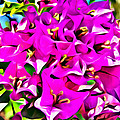Pink Bouganvilla by Alice Gipson