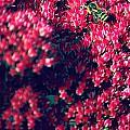 Pink Bumblebee by Danielle Mattson