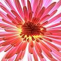 Pink Burst by Sherry Allen