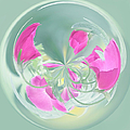 Pink California Poppy Orb by Kim Hojnacki