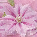Pink Clematis Profusion by Betty LaRue