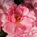 Pink Cluster by Jacklyn Duryea Fraizer
