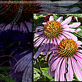 Pink Coneflowers by Evie Carrier
