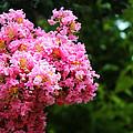 Pink Contrast by Elijah Gomez