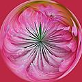 Pink Dahlia Orb by Tikvah's Hope