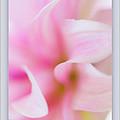 Pink Dahlia Petals by Marie Jamieson