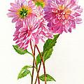 Pink Dahlias by Sharon Freeman