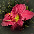 Pink Day Lily by Joyce Dickens