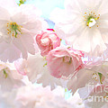 Pink by Deena Otterstetter