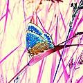 Pink Dream by Marianna Mills