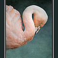 Pink Flamingo 2 Tropical Bird Christmas Cards by Jai Johnson