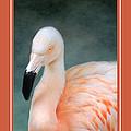 Pink Flamingo 3 Tropical Bird Christmas Cards by Jai Johnson