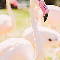Pink Flamingo Portrait by Pati Photography