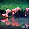 Pink Flamingos by John Malone
