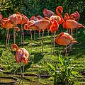 Pink Flamingos by Steve Harrington