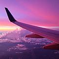 Pink Flight by Chad Dutson