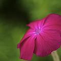 Pink - Floral Art Print by Jane Eleanor Nicholas