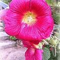 Pink Flower by Jennifer Evans
