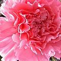 Pink Flower by Lisa Byrne