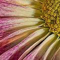 Pink Flower Macro by Martin Belan