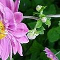 Pink Flower Shiver by Susan Garren