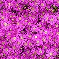 Pink Flowers by FL collection