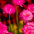 Pink Flowers by Michael Moriarty