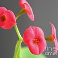 Pink Flowers by Owl's View Studio