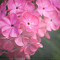 Pink Flowers by Sherry Wright