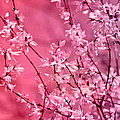 Pink Forsythia by Pati Photography