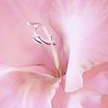 Pink Gladiolus Flower by Jennie Marie Schell