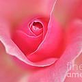 Pink Glow