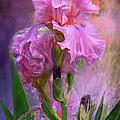 Pink Goddess by Carol Cavalaris