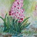 Pink Hyacint by Anna Ruzsan