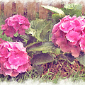 Pink Hydrangeas by Paulette B Wright