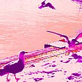 When Seagulls Are Living The Pink Life  by Hilde Widerberg