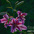 Pink Lilies In The Rain 2 by Sharon Talson